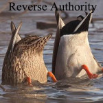 Ducks From Reverse Authority