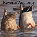Ducks From Reverse Authority