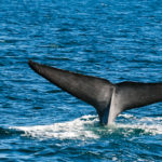 whale-tail-photo-1-of-1