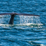 whale-tail-photo-2-of-1