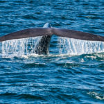 whale-tail-photo-3-of-1