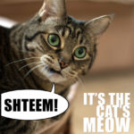 shteem-cat